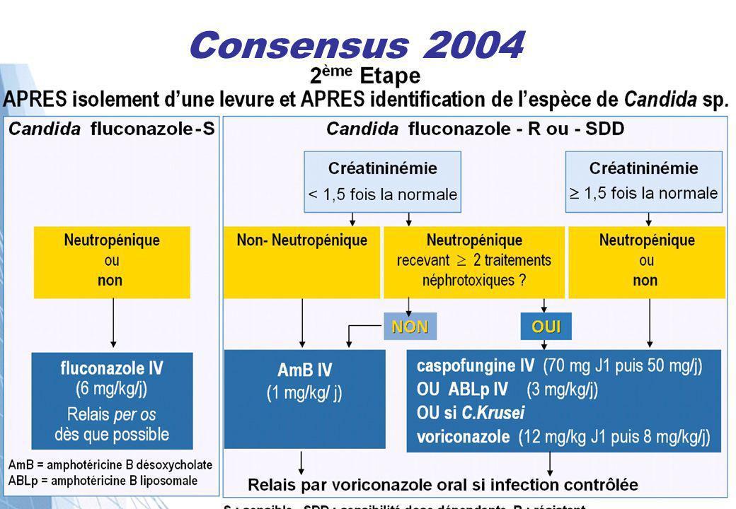 Consensus 2004
