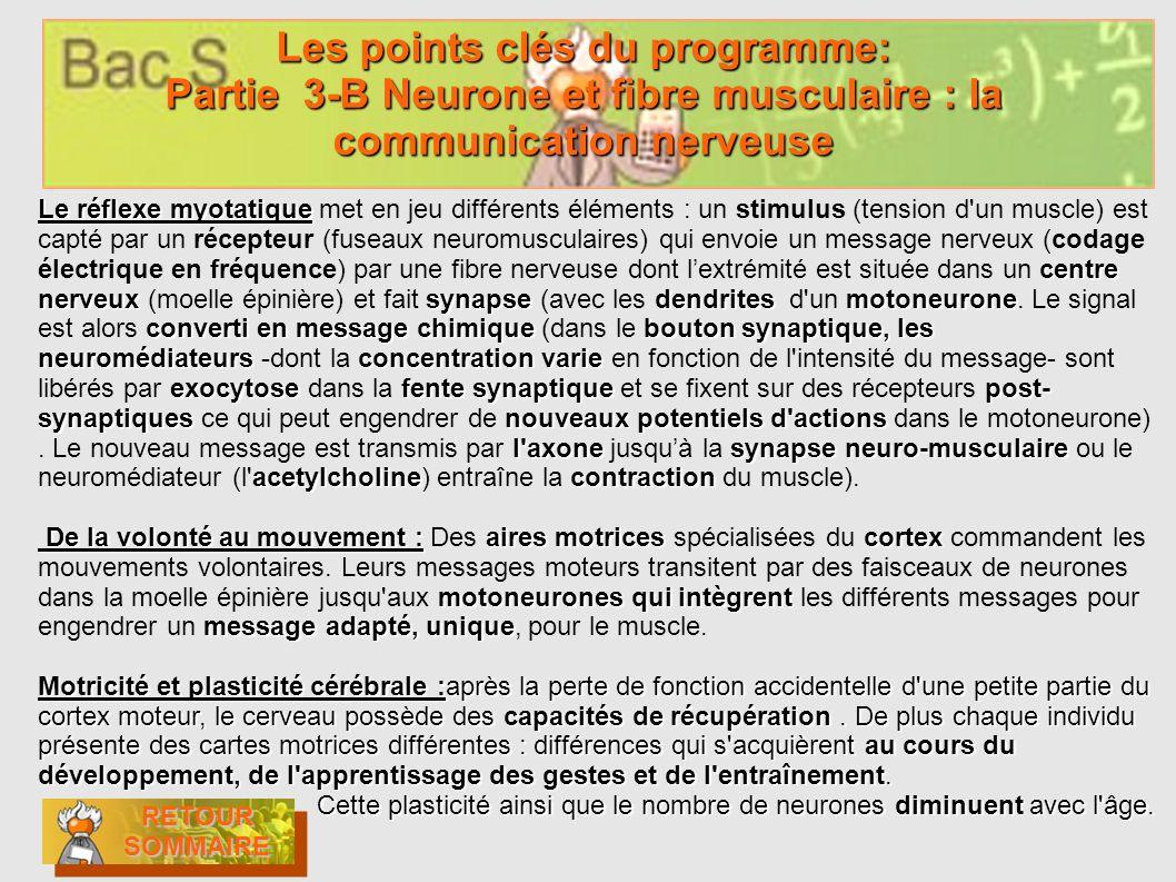 Les points clés du programme: Partie 3-B Neurone et fibre musculaire : la communication nerveuse