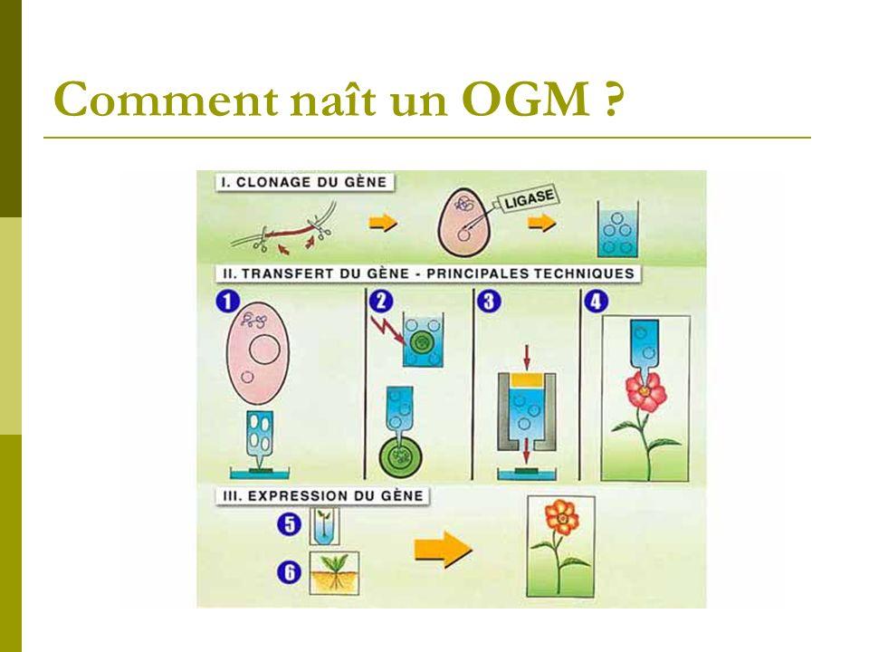 Comment naît un OGM