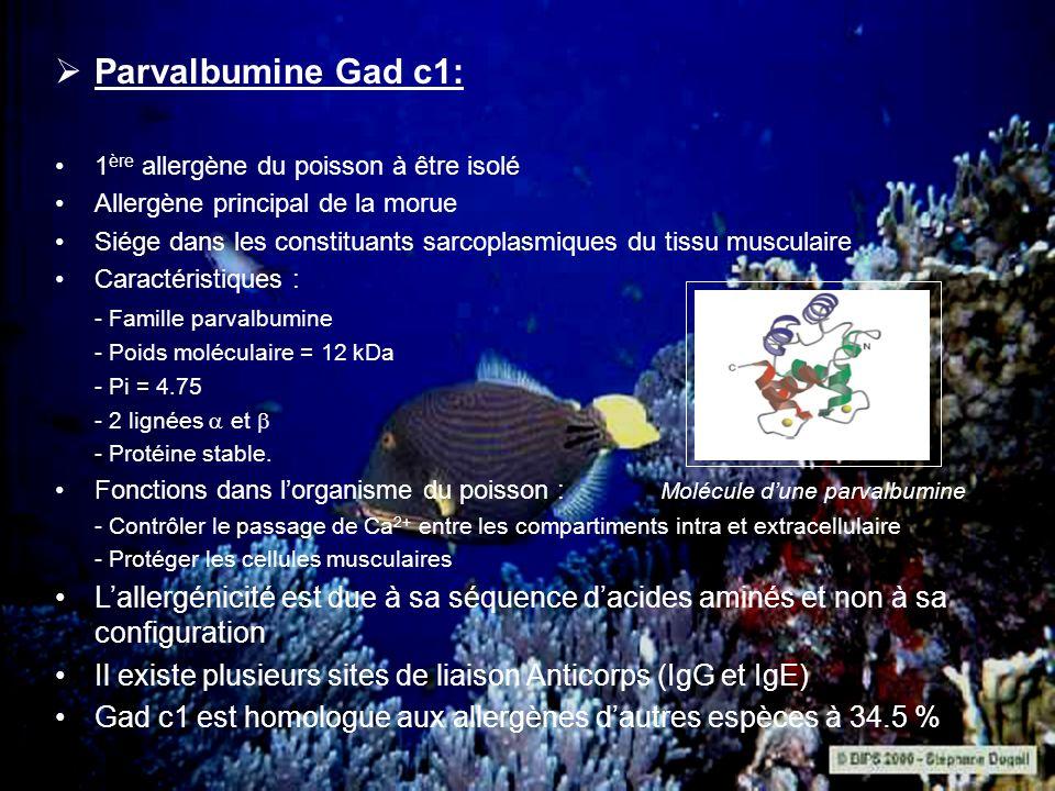 Parvalbumine Gad c1: 1ère allergène du poisson à être isolé. Allergène principal de la morue.