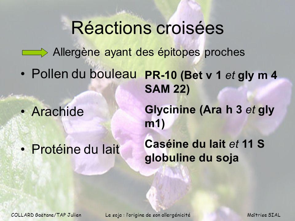 Réactions croisées Pollen du bouleau Arachide Protéine du lait
