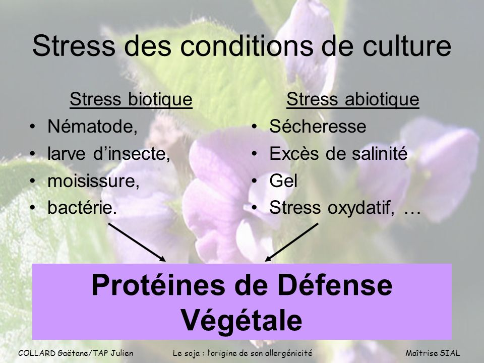 Stress des conditions de culture