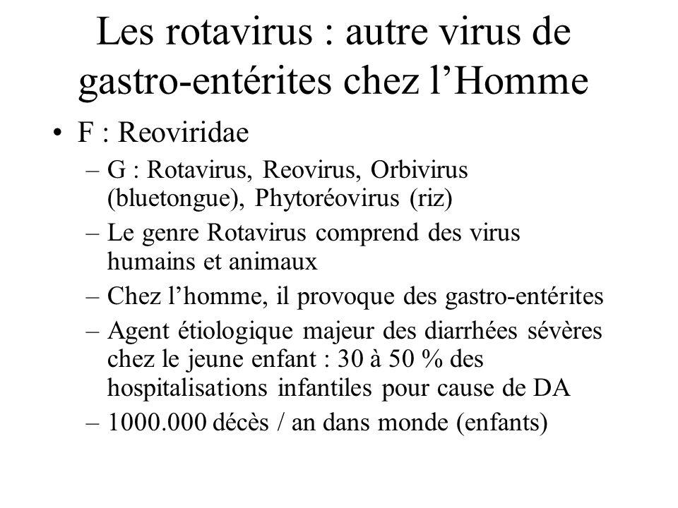 Les rotavirus : autre virus de gastro-entérites chez l'Homme