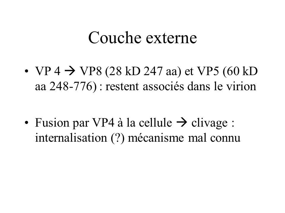 Couche externeVP 4  VP8 (28 kD 247 aa) et VP5 (60 kD aa 248-776) : restent associés dans le virion.
