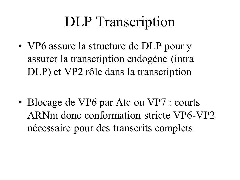 DLP Transcription VP6 assure la structure de DLP pour y assurer la transcription endogène (intra DLP) et VP2 rôle dans la transcription.