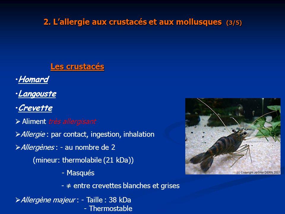 2. L'allergie aux crustacés et aux mollusques (3/5)
