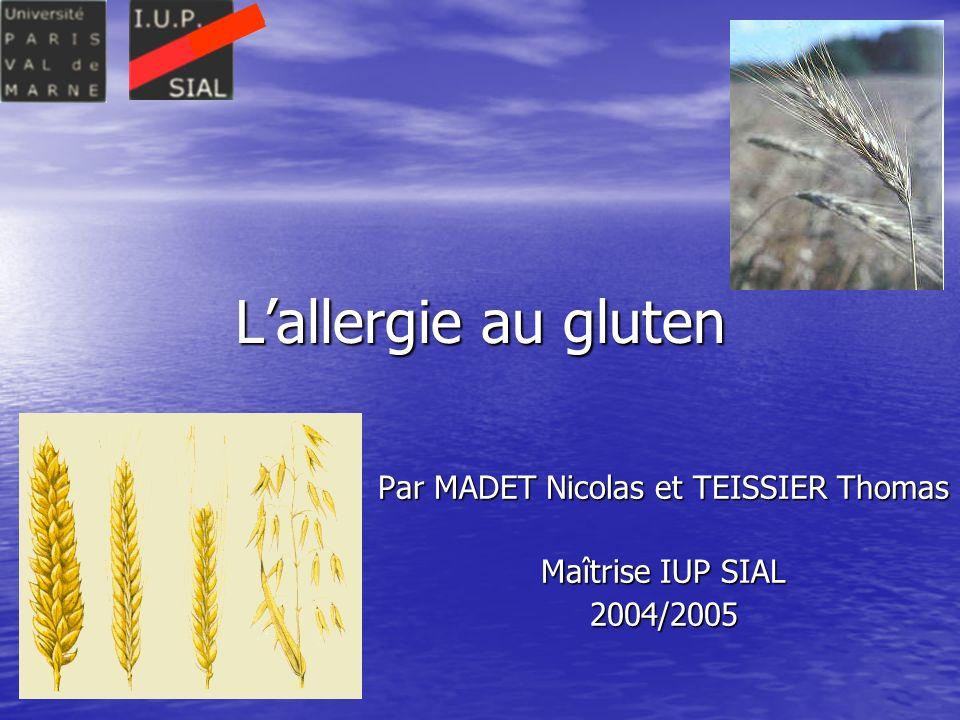 Par MADET Nicolas et TEISSIER Thomas Maîtrise IUP SIAL 2004/2005