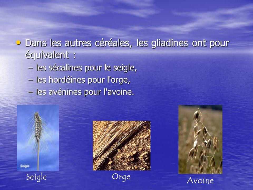 Dans les autres céréales, les gliadines ont pour équivalent :
