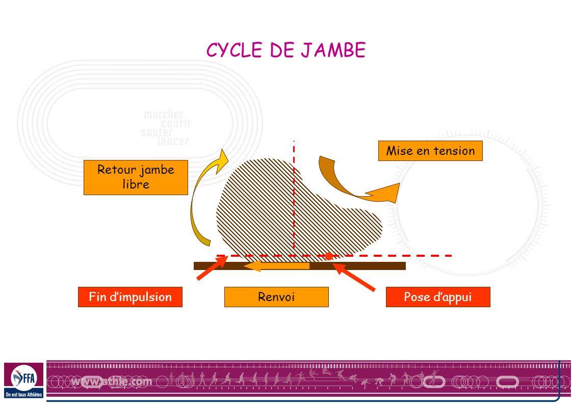 CYCLE DE JAMBE Mise en tension Retour jambe libre Fin d'impulsion