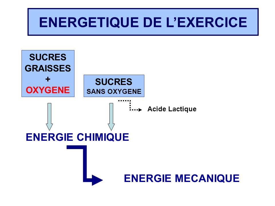 ENERGETIQUE DE L'EXERCICE