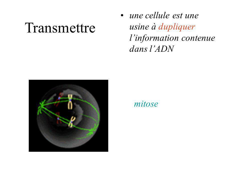 une cellule est une usine à dupliquer l'information contenue dans l'ADN