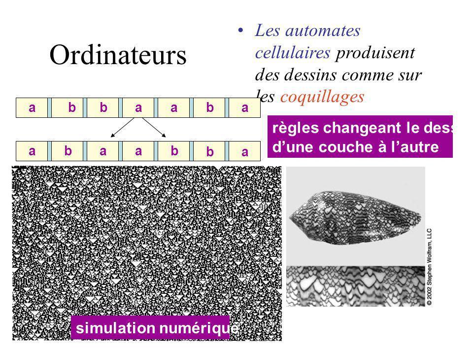 Les automates cellulaires produisent des dessins comme sur les coquillages