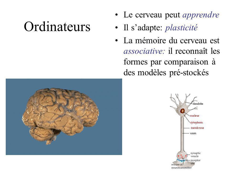 Ordinateurs Le cerveau peut apprendre Il s'adapte: plasticité