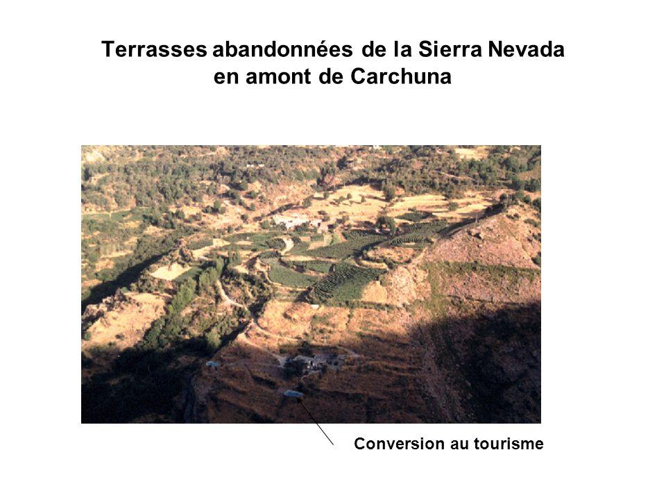Terrasses abandonnées de la Sierra Nevada en amont de Carchuna
