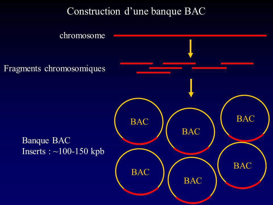 Construction d'une banque BAC