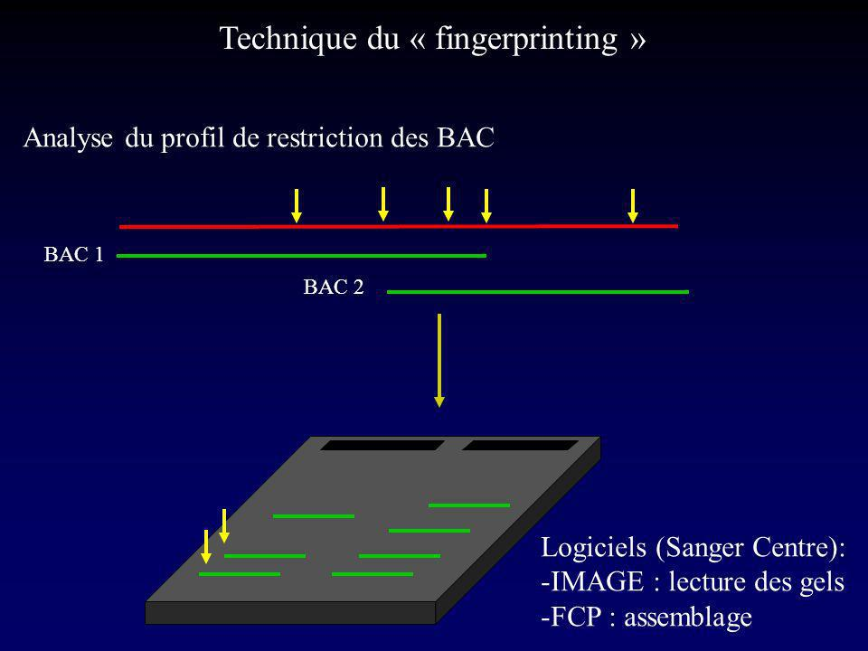 Technique du « fingerprinting »