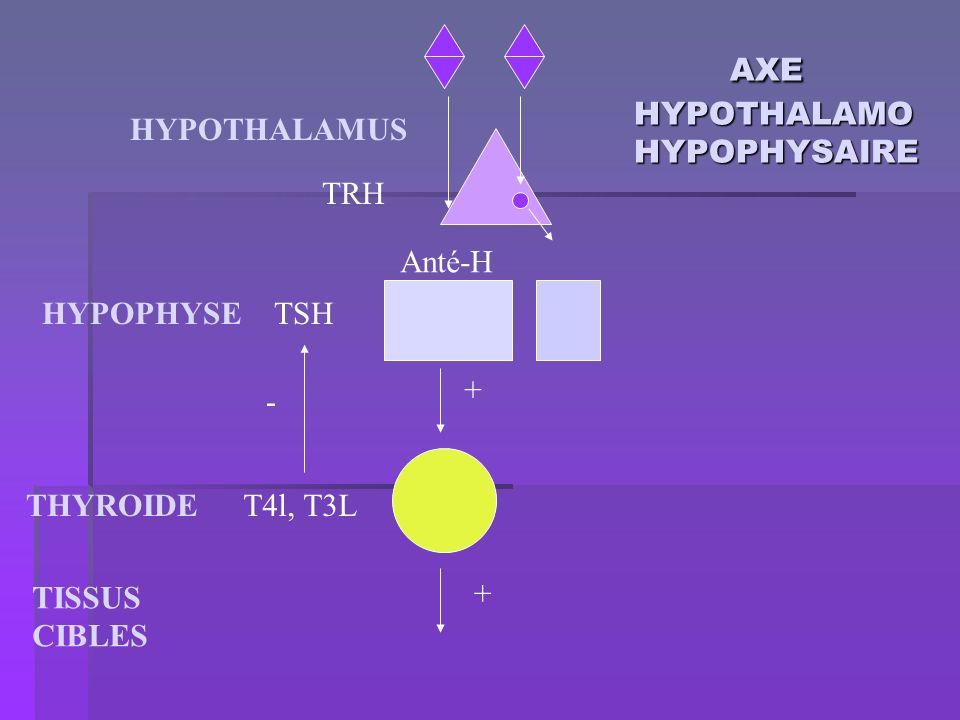 AXE HYPOTHALAMO HYPOPHYSAIRE