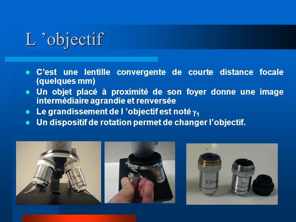 L 'objectif C'est une lentille convergente de courte distance focale (quelques mm)