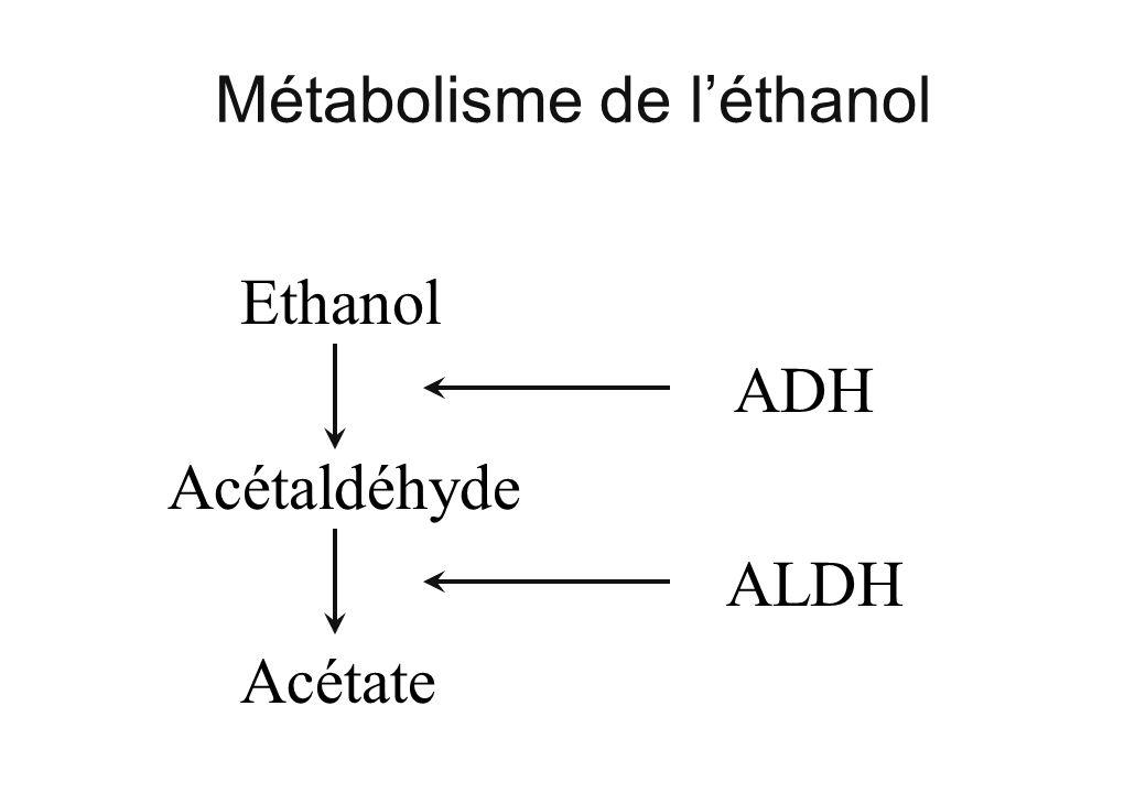 Métabolisme de l'éthanol