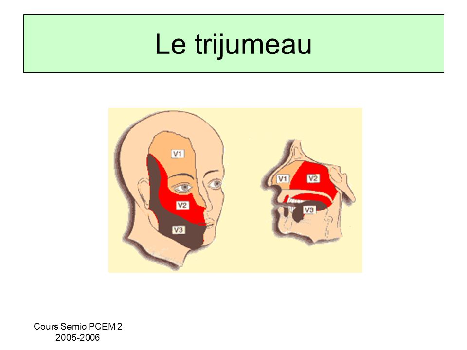 Le trijumeau Cours Semio PCEM 2 2005-2006