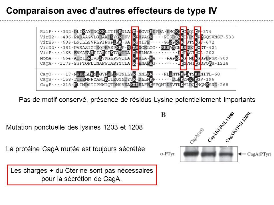 Comparaison avec d'autres effecteurs de type IV