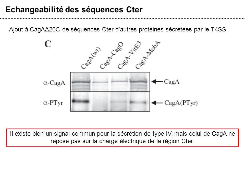 Echangeabilité des séquences Cter