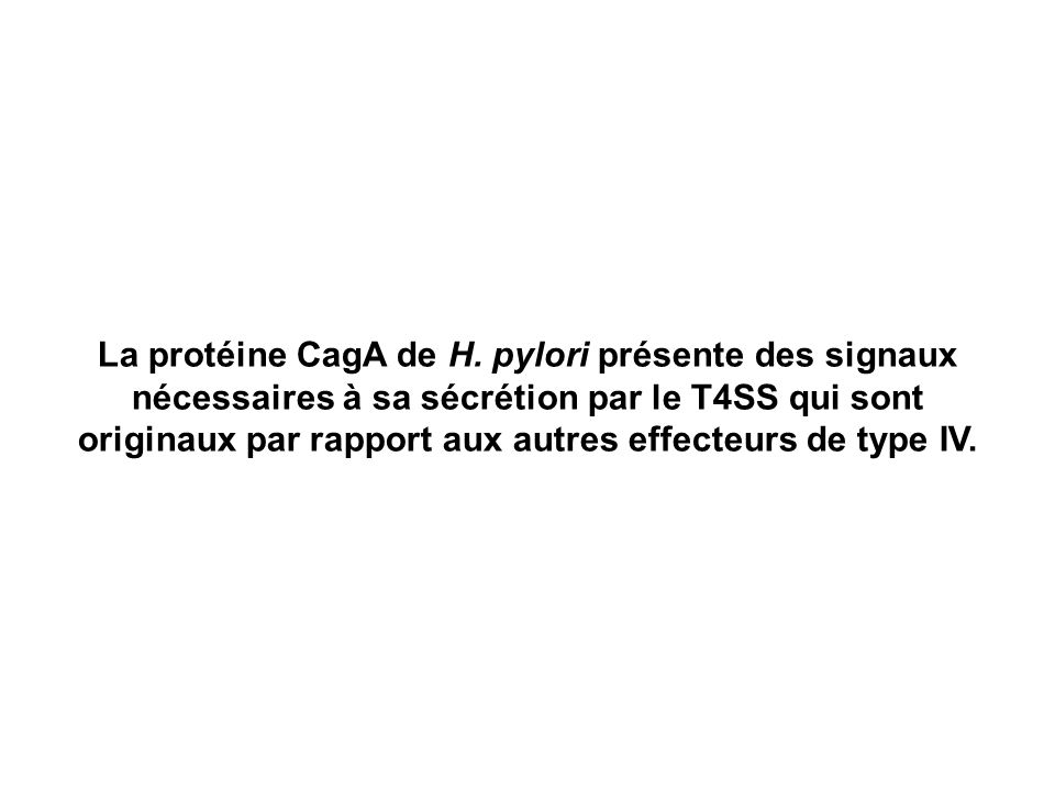 La protéine CagA de H.