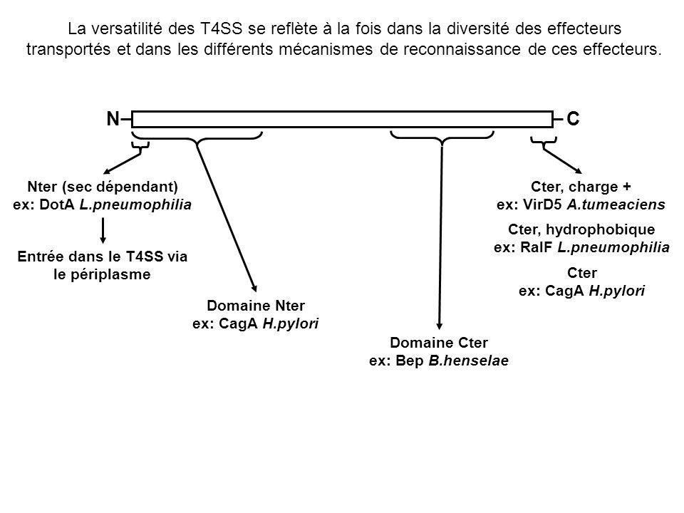 La versatilité des T4SS se reflète à la fois dans la diversité des effecteurs transportés et dans les différents mécanismes de reconnaissance de ces effecteurs.