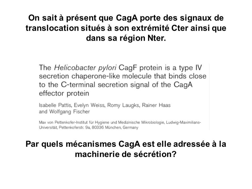 On sait à présent que CagA porte des signaux de translocation situés à son extrémité Cter ainsi que dans sa région Nter.