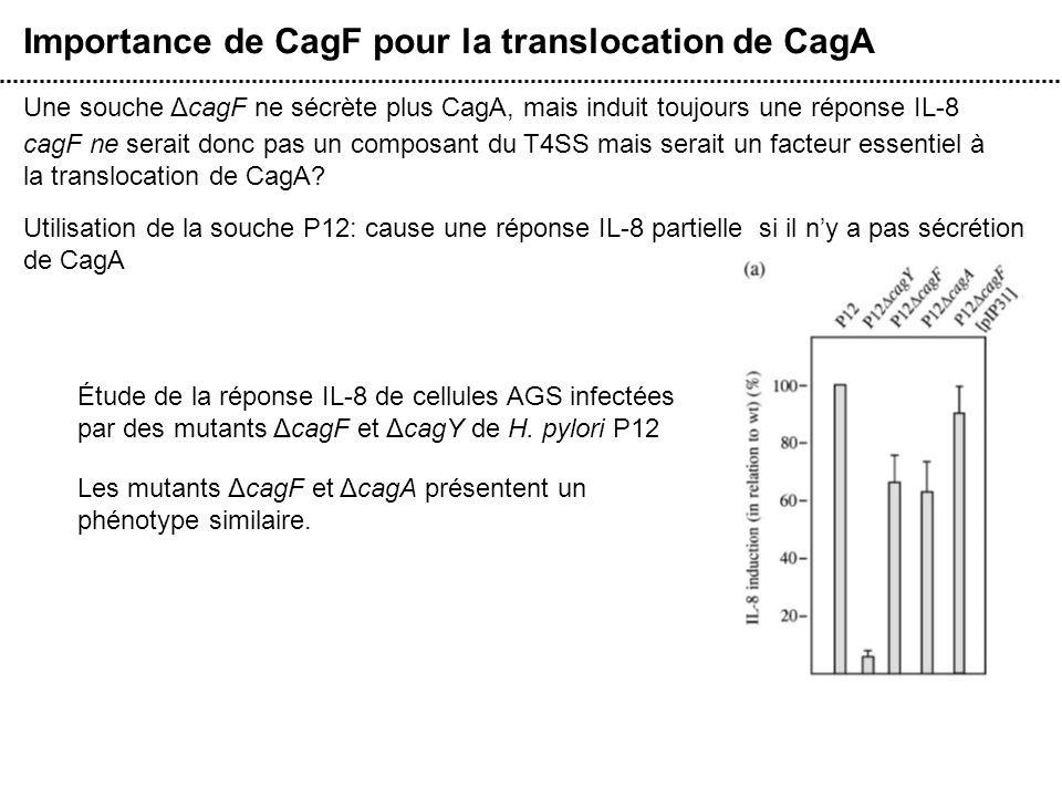 Importance de CagF pour la translocation de CagA
