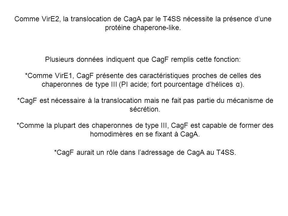 Plusieurs données indiquent que CagF remplis cette fonction: