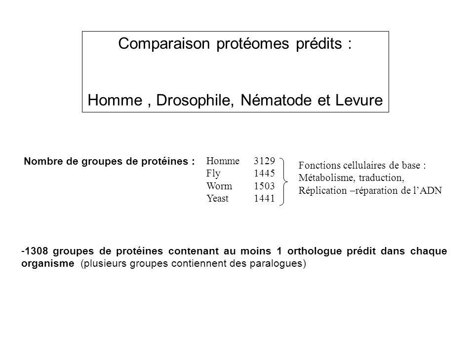 Comparaison protéomes prédits :