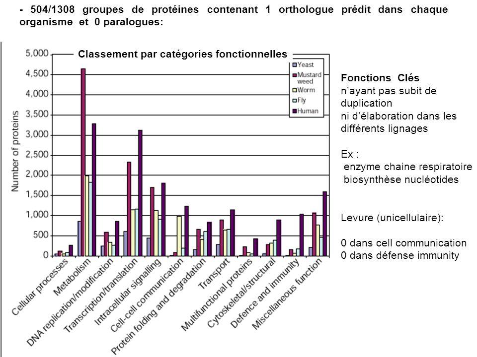 - 504/1308 groupes de protéines contenant 1 orthologue prédit dans chaque organisme et 0 paralogues: