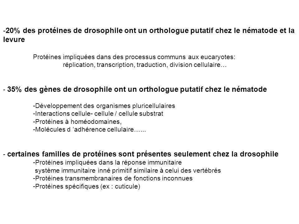 20% des protéines de drosophile ont un orthologue putatif chez le nématode et la levure