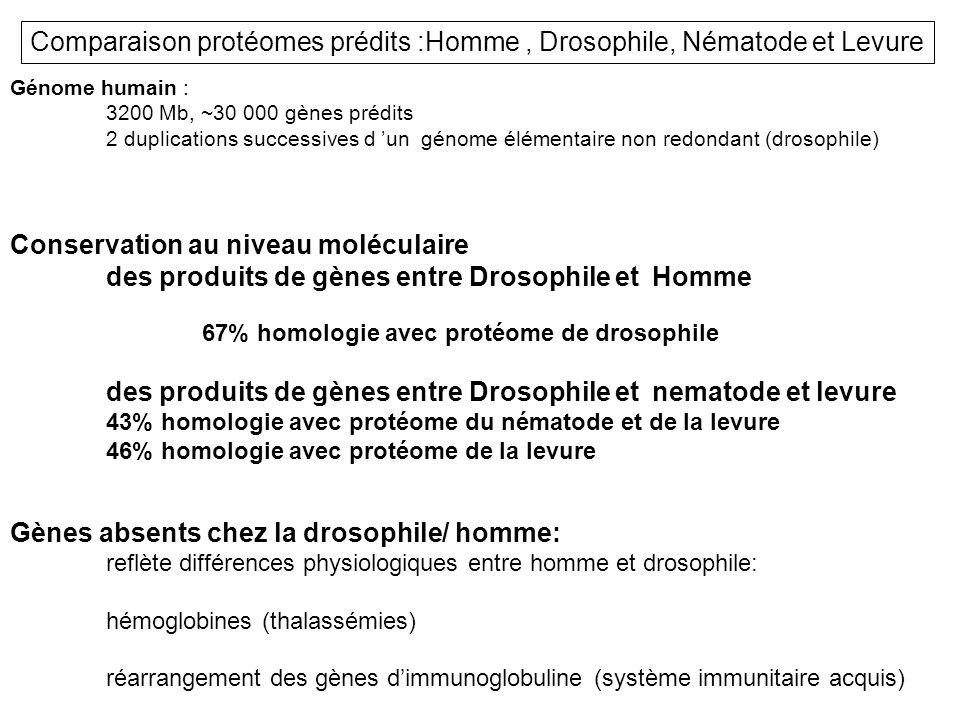 Comparaison protéomes prédits :Homme , Drosophile, Nématode et Levure