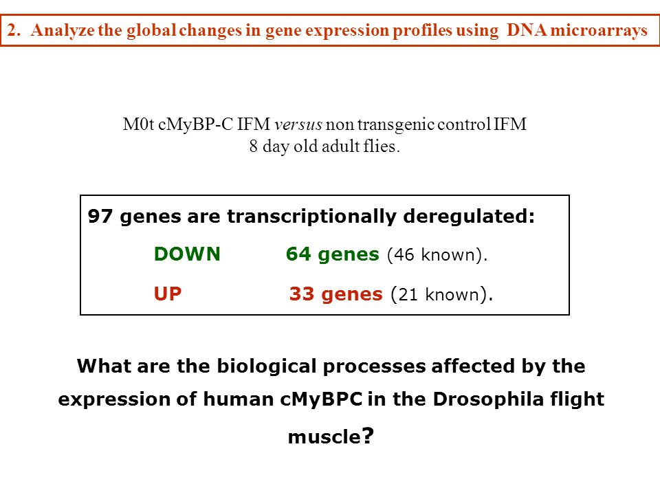 M0t cMyBP-C IFM versus non transgenic control IFM