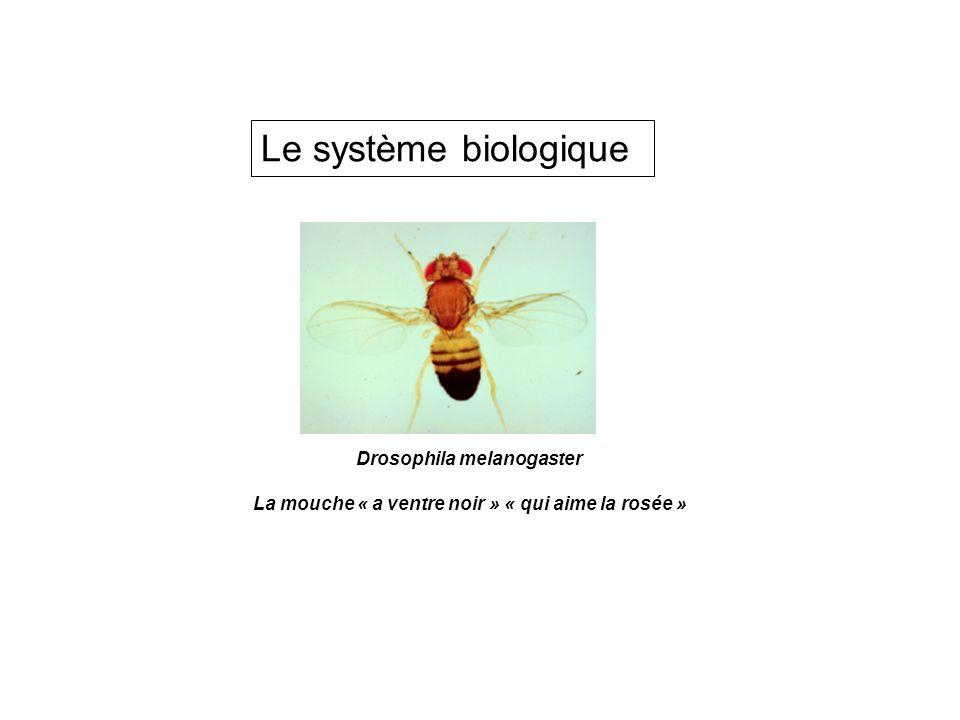 Le système biologique Drosophila melanogaster