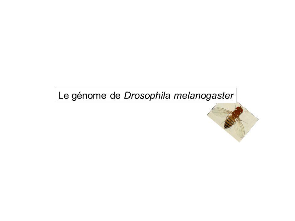 Le génome de Drosophila melanogaster