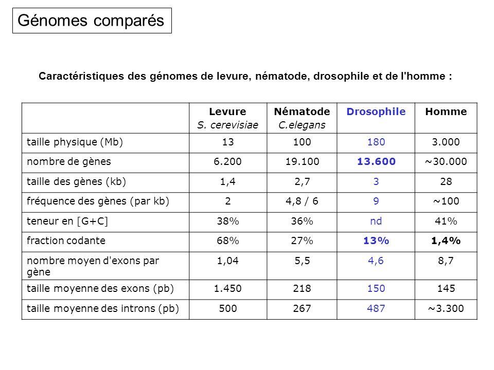 Génomes comparésCaractéristiques des génomes de levure, nématode, drosophile et de l homme : Levure.
