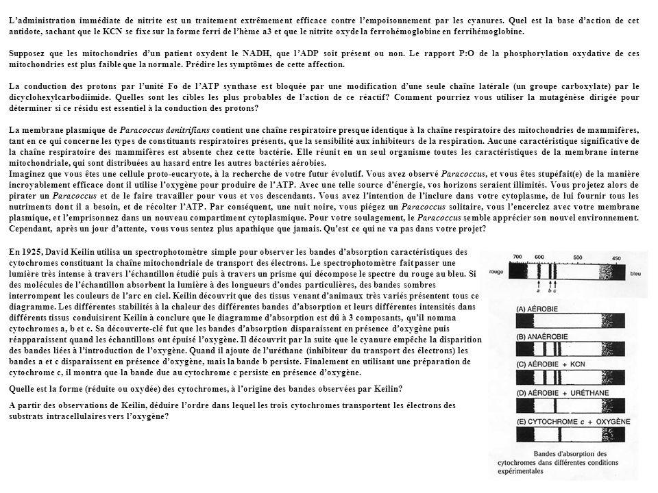 L'administration immédiate de nitrite est un traitement extrêmement efficace contre l'empoisonnement par les cyanures. Quel est la base d'action de cet antidote, sachant que le KCN se fixe sur la forme ferri de l'hème a3 et que le nitrite oxyde la ferrohémoglobine en ferrihémoglobine.