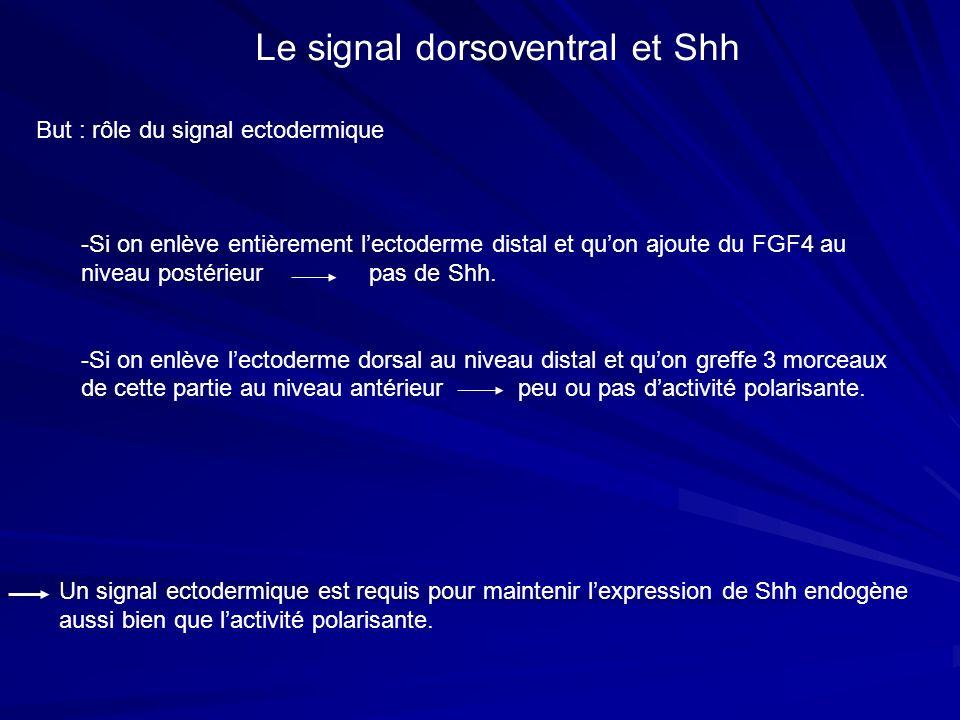Le signal dorsoventral et Shh
