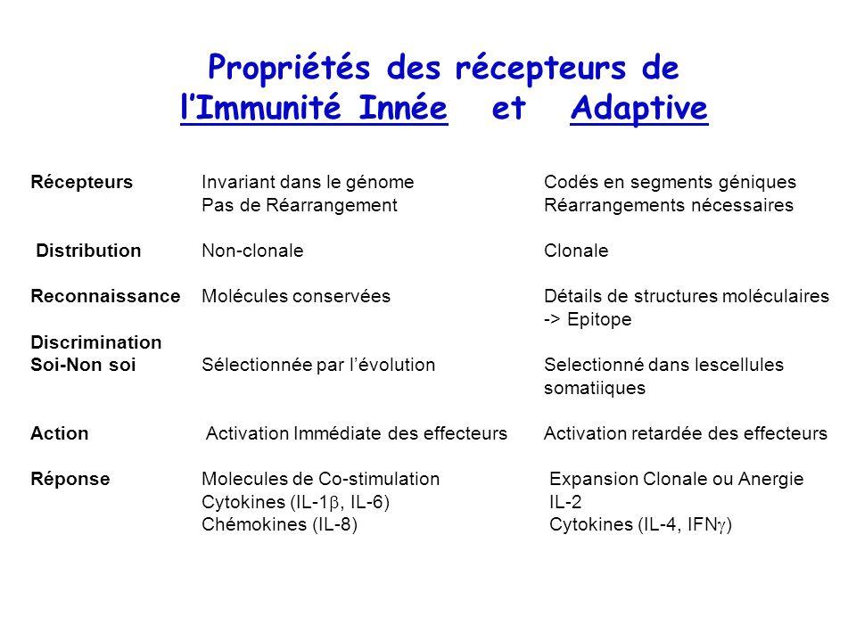 Propriétés des récepteurs de l'Immunité Innée et Adaptive