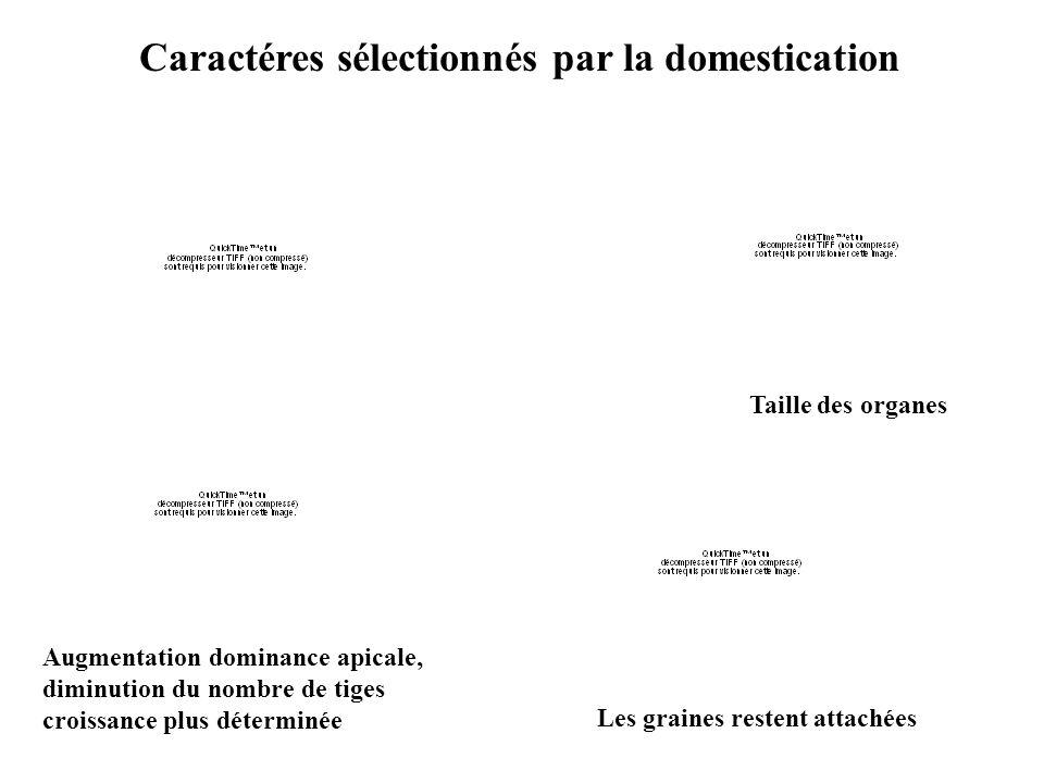 Caractéres sélectionnés par la domestication