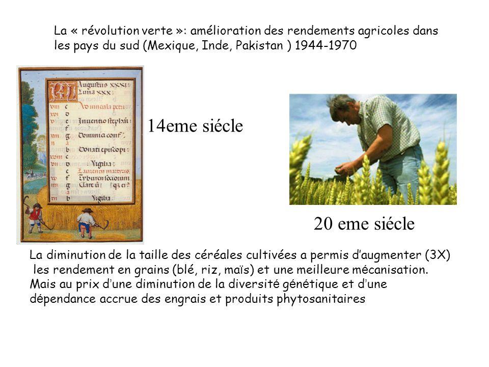 La « révolution verte »: amélioration des rendements agricoles dans