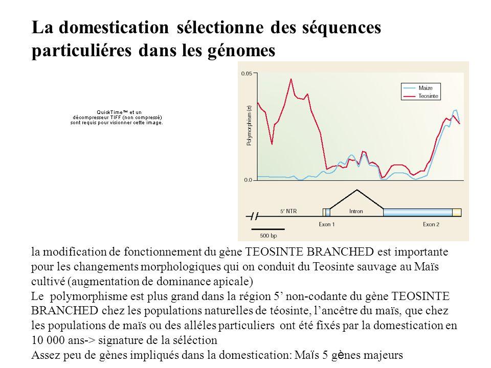 La domestication sélectionne des séquences particuliéres dans les génomes