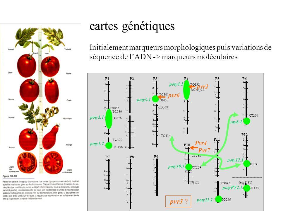 cartes génétiques Initialement marqueurs morphologiques puis variations de séquence de l'ADN -> marqueurs moléculaires.