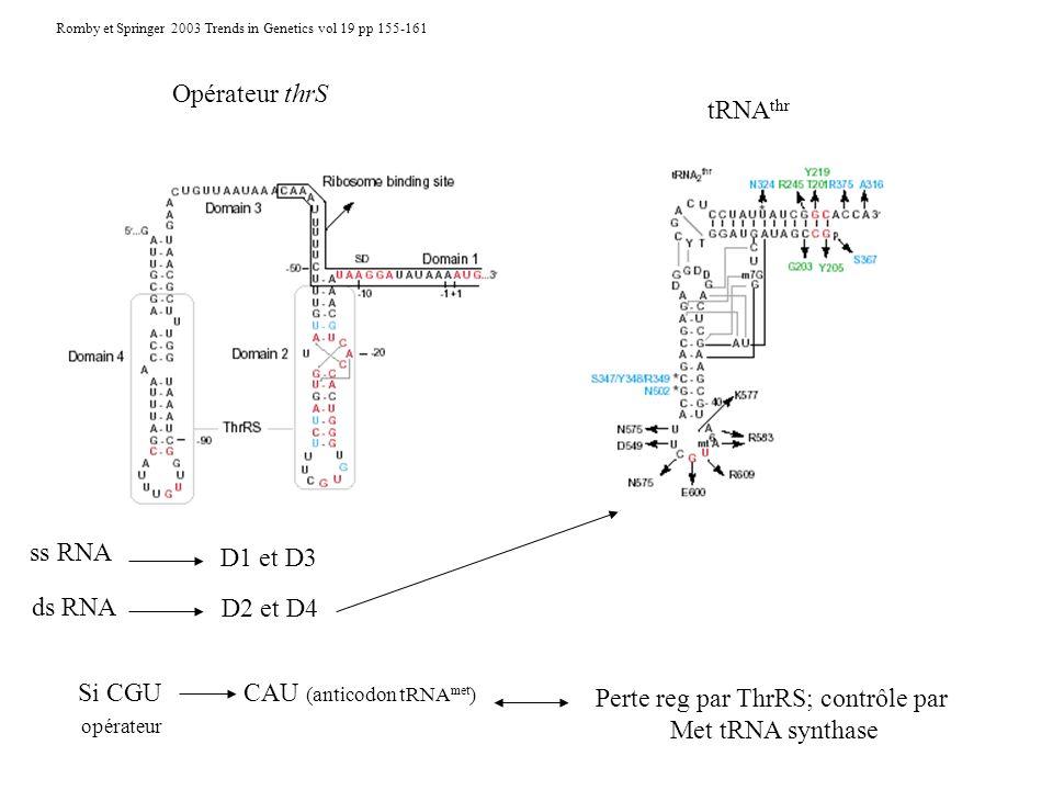 CAU (anticodon tRNAmet) Perte reg par ThrRS; contrôle par