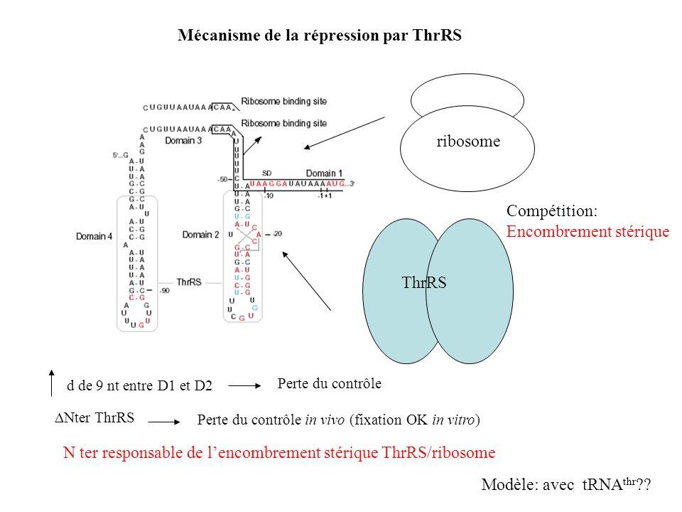 Mécanisme de la répression par ThrRS