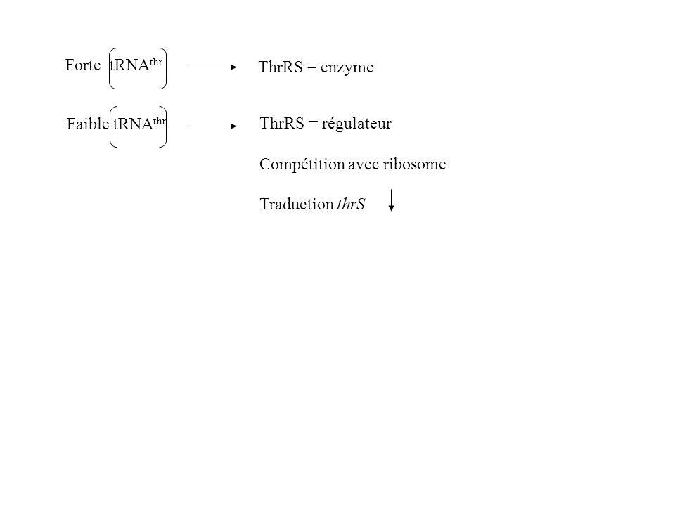 Forte tRNAthr ThrRS = enzyme. Faible tRNAthr. ThrRS = régulateur.