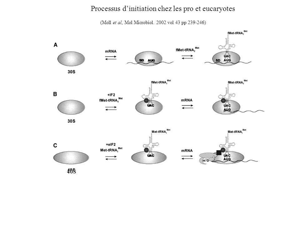 Processus d'initiation chez les pro et eucaryotes